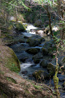 Hike on Lewis Creek Trail.