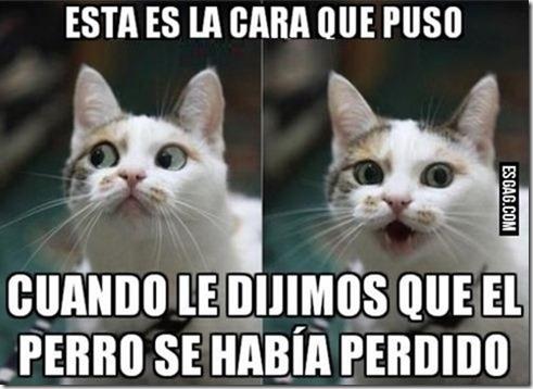 humor gatos (6)