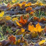 Солнышко в опавшей листве