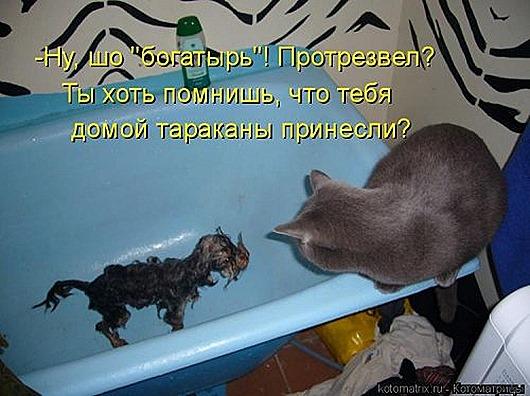 1439561507_kotomatrica-3