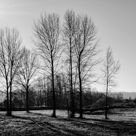 Winter afternoon  by Todd Reynolds - Black & White Flowers & Plants