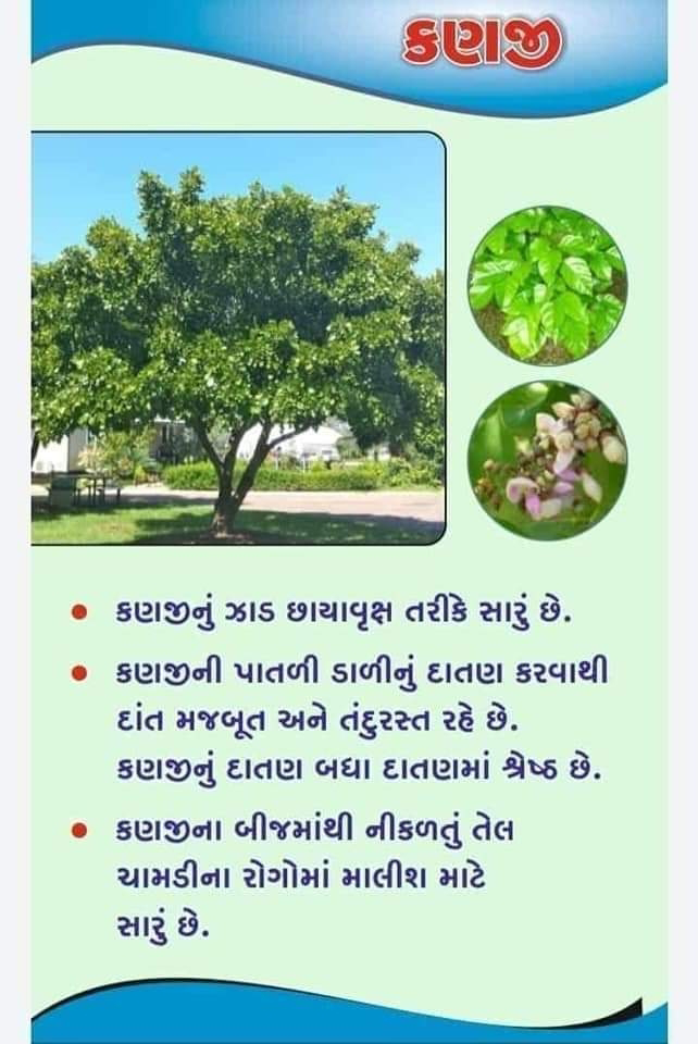 USE OF KANAJI IN HEALTH TREATMENT
