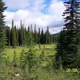Aren't alpine meadows cool?