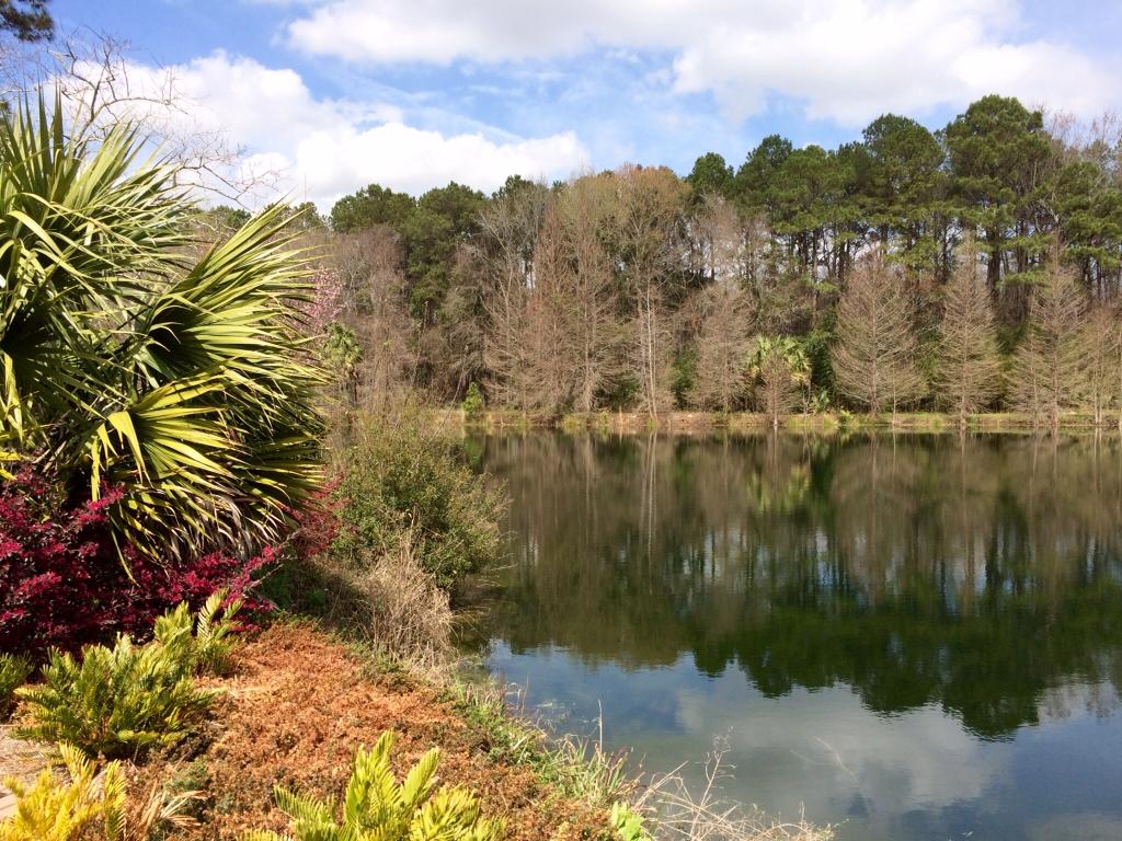 I 39 M Retired Adventures Of A Simpler Life Coastal Georgia Botanical Gardens