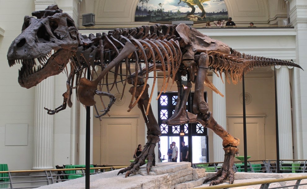 Palaeontology: Dinosaur 13 and fossil protection on US public lands