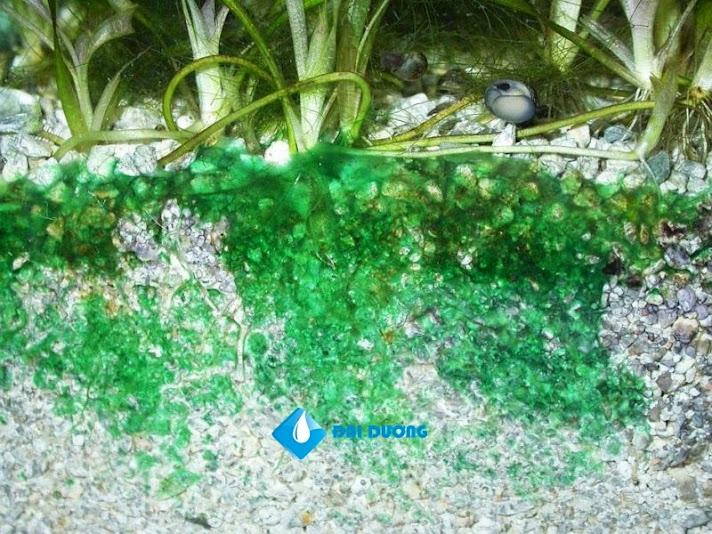diệt rêu tảo trong hồ, vi khuan lam