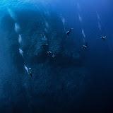 Descent to 50 meters, Daedalus reef (© 2015 Bernd Neeser)
