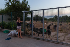 Dog shelter in Split with lots of dogs.