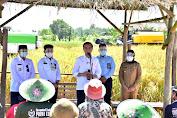 Presiden Jokowi Senang Produktivitas Padi Tinggi dan Harga Gabah Petani Naik