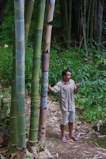 Notre guide Jean-Yves prodiguant des explications sur les bambous. Près d'Hell-bourg