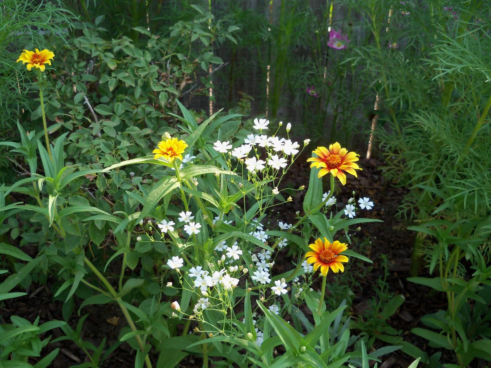 Gardening 2010, Part Two - 101_3025.JPG
