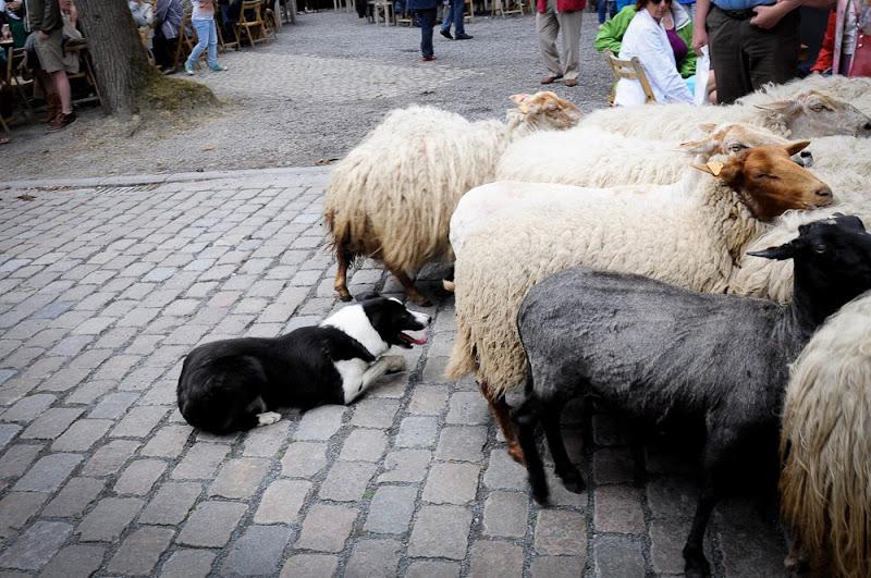 Kust- en Ambachtenmarkt 2015 _DSC0540-001.jpg