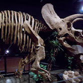 Houston Museum of Natural Science, Sugar Land - 114_6689.JPG
