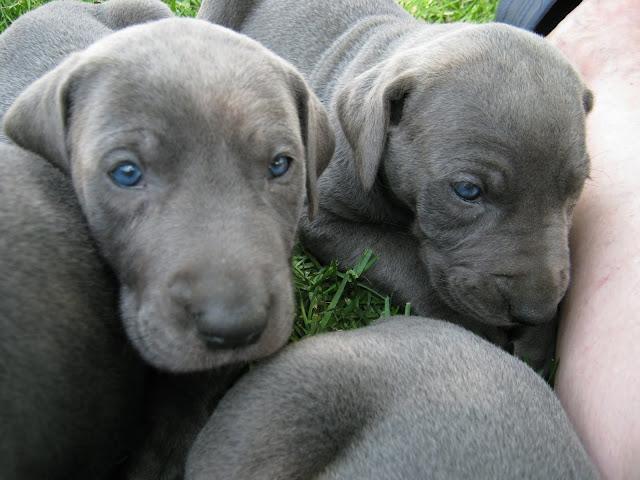 Bluebelle & Cobys 4/19/10 litter - IMG_0939.JPG