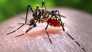Mosquitoes Are Our Friends, Stop Killing Them - UNILORIN Professor Decries