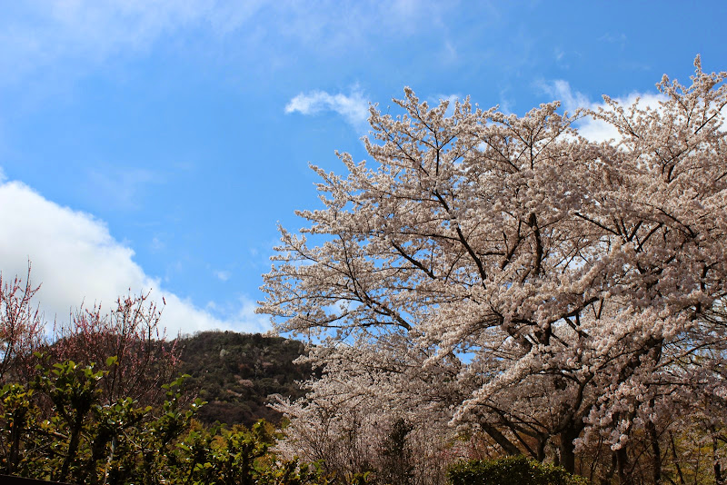 2014 Japan - Dag 8 - marjolein-IMG_1082-0036.JPG