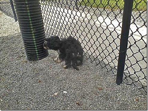 Tarpon Doggie Park Chloe2
