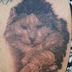 Linda's Cat