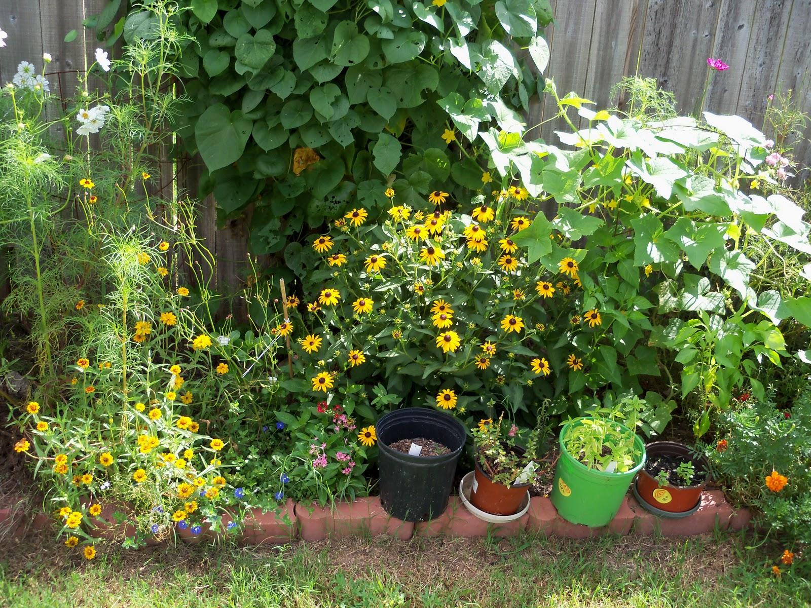Gardening 2010, Part Three - 101_5011.JPG