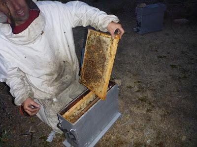 Jean-luc et ses abeilles