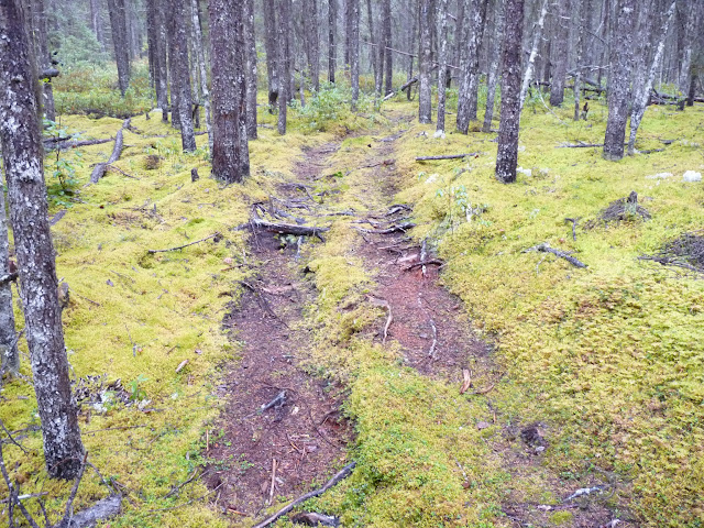 Trail between Lac Fourchette and the Manicouagan Reservoir