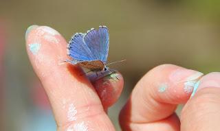 vlinder en hand 1