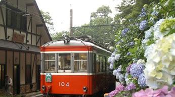 箱根登山列車とあじさい