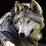 Peaceful Wolf's profile photo