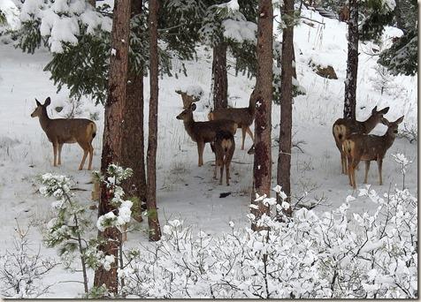 Poster_deers
