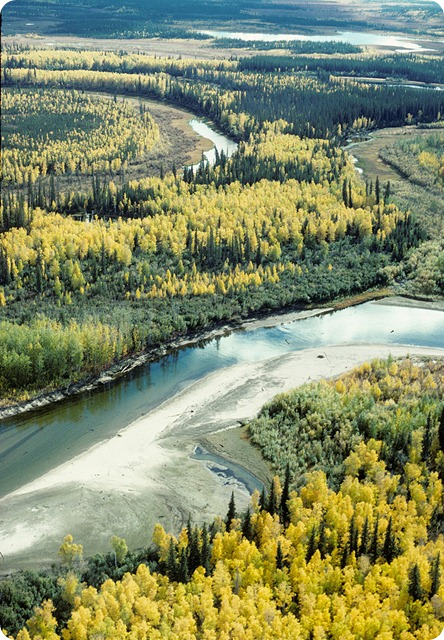 taiga-Fall_on_the_Yukon