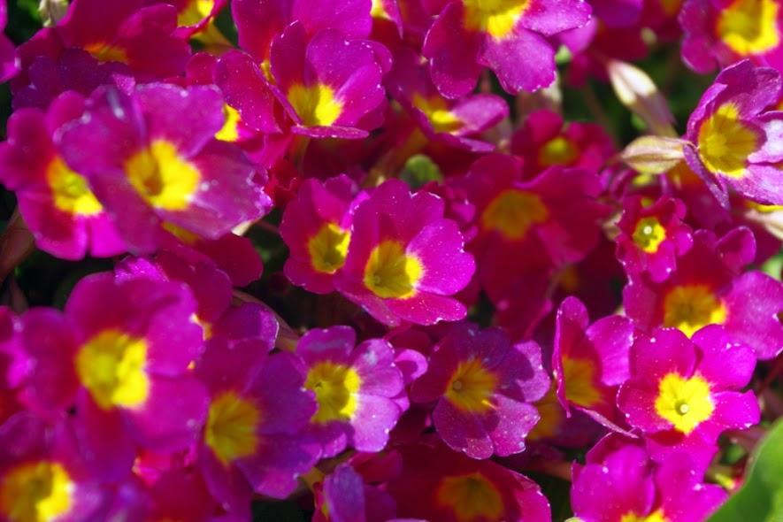 Поговорим о цветах.... - Страница 3 IMGP9799