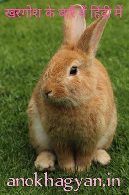 खरगोश से जुड़े 96 रोचक तथ्य | 96 Interesting Facts Related To Rabbit