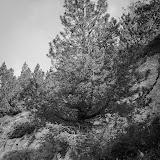Fête de la Montagne-034.jpg