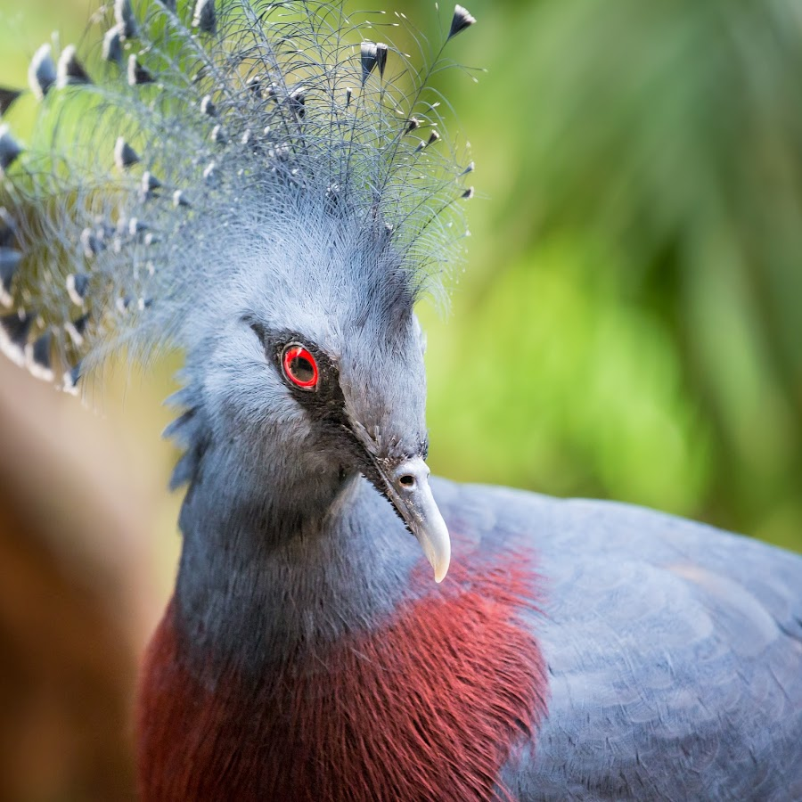 Crown Crested Crane by Ed & Cindy Esposito - Animals Birds ( looking at you, animals, attleboro, crown, crane, feathers, capron park zoo, eyeball )
