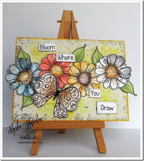 bloom where you grow using Daisydays cd