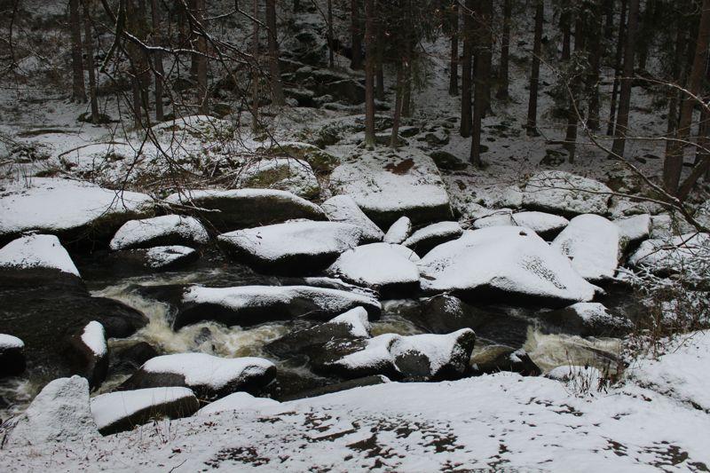 01. Januar 2016: Neujahrswanderung ins Waldnaabtal - IMG_1522.JPG