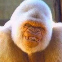 Profile photo of ape_with_humour