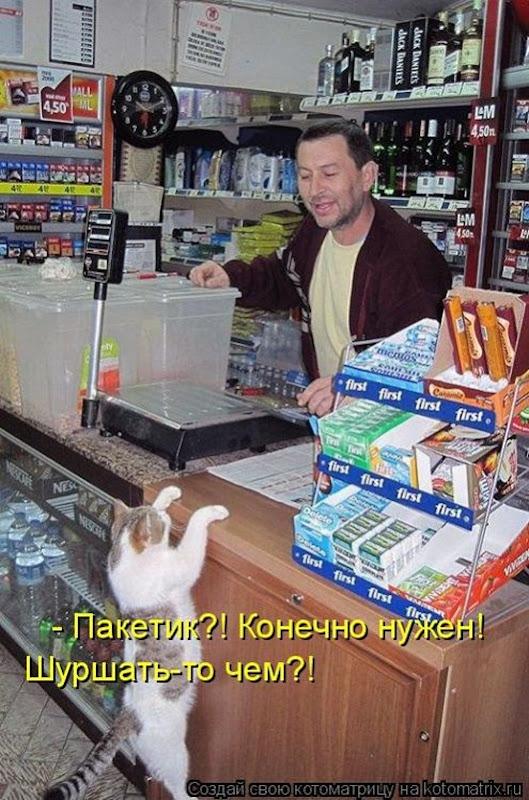 1494626439_kotomatricy-7