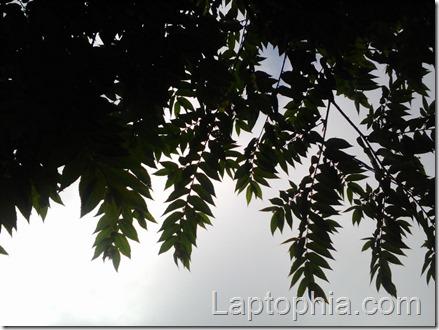 Hasil Foto Kamera Lenovo A1000