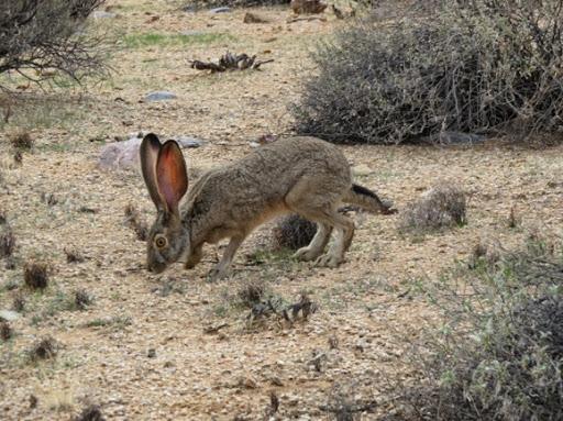 bunny-2016-12-21-20-46.jpg