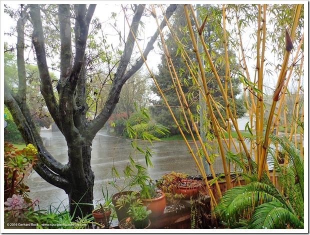 160311_rain_006