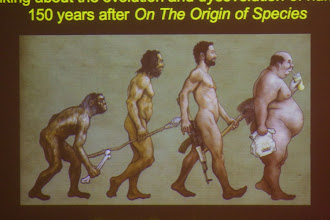 """Photo: (Cambridge, MA - March 5, 2009)  - Illustrative slides at shown as Daniel E. Lieberman, (cq) Professor of Anthropology speaks about """"Survival of the fleetest, smartest or fattest? Thinking about evolution and dysevelution of humans 150 years after 'On The Origin of Species' """" inside the Geological Lecture Hall at Harvard University. Staff Photo Kris Snibbe/Harvard News Office"""