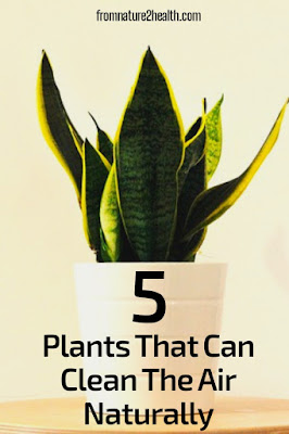 Aglaonema, Areca Palm, Pachira Aquatic, Peace Lily, Sansevieria Can Clean The Air Naturally