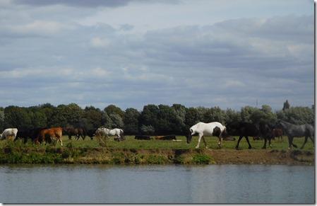 5 port meadow