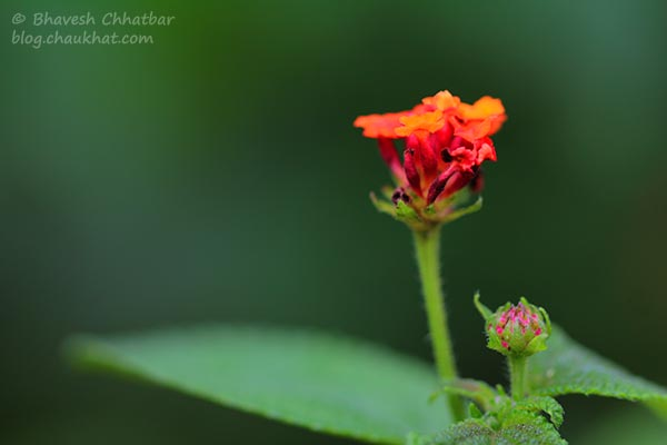 Macro photo of tiny nectar-filled wild colorful flowers
