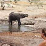 Botswana Elephants Sands