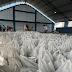 SAPÉ: após seis anos, prefeitura volta a realizar entrega de peixes na Semana Santa