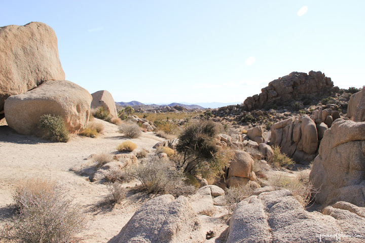 Road Trip USA : Joshua Tree National Park
