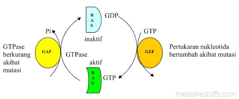 gambar-6-interaksi-protein-Ras-dengan-guanine-nukleotida