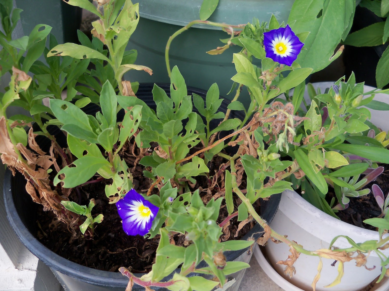 Gardening 2011 - 100_0136.JPG